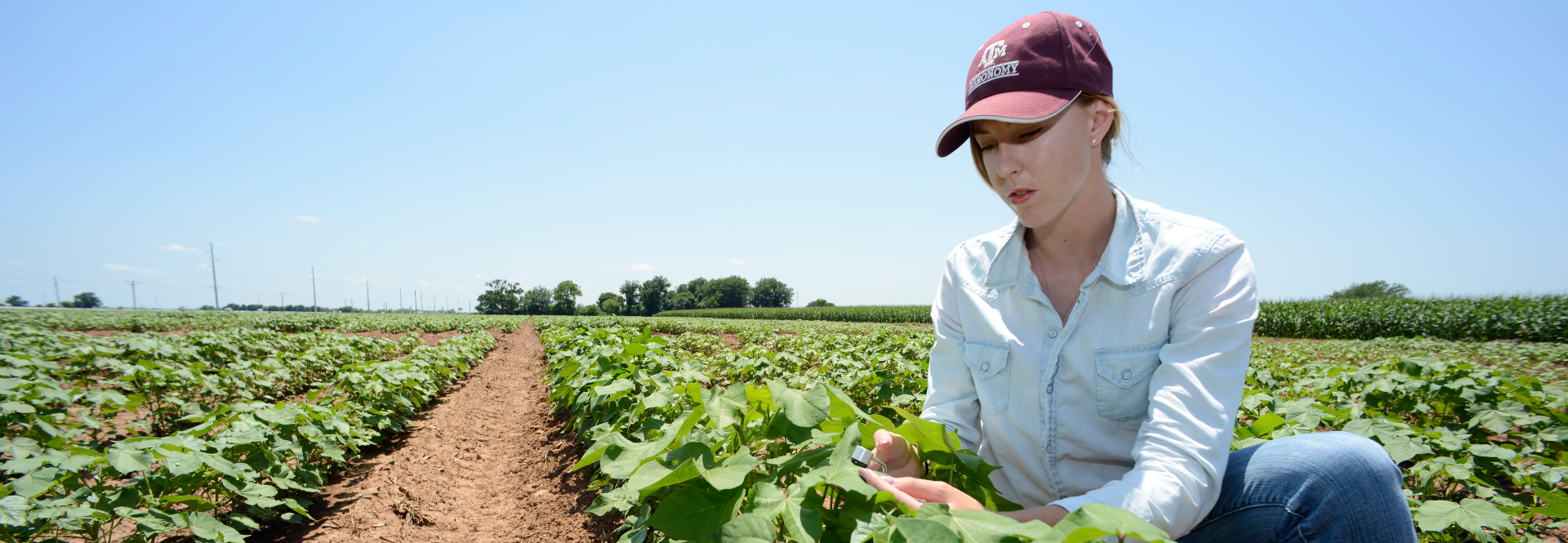 A Lead by Example donation creates the Norman Borlaug Endowed Research Scholars Program to foster the next generation of agricultural pioneers.